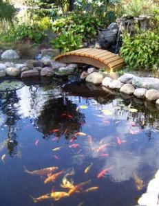Fish Pond Designs Pond design tips hydrosphere water gardens pond design tips workwithnaturefo