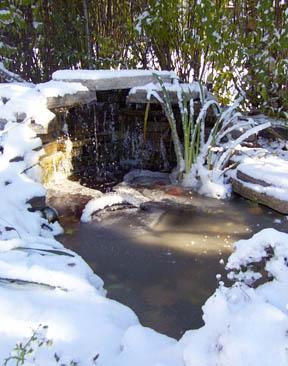 winterize your pond