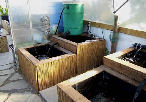 Japanese koi fish tubs