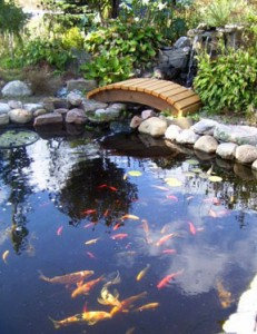 Pond Design Tips Hydrosphere Water Gardens