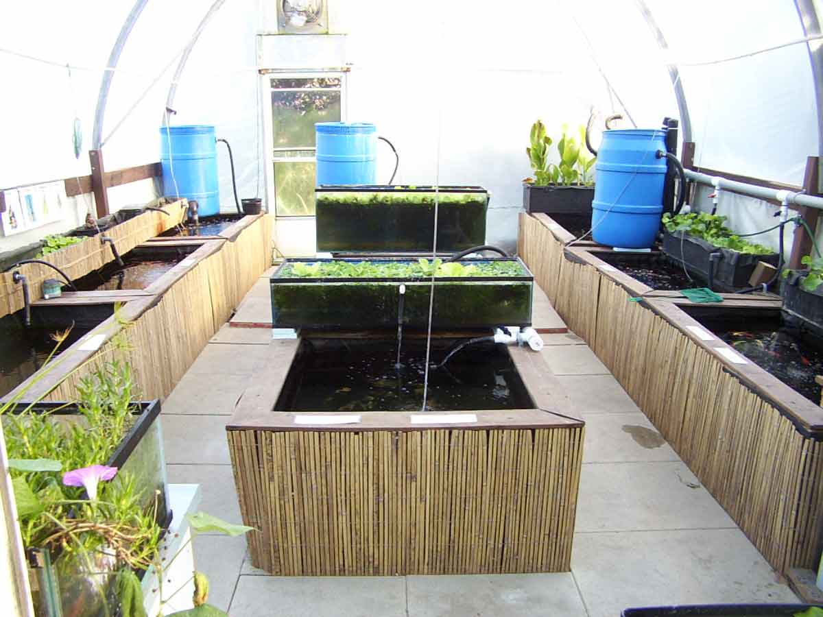 Hydrosphere the Pond Experts Koi Greenhouse