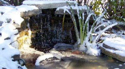 how to winterize your pond & fall pond care
