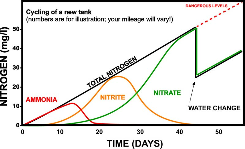 The Nitrogen Cycle - Ammonia in Ponds and Aquariums