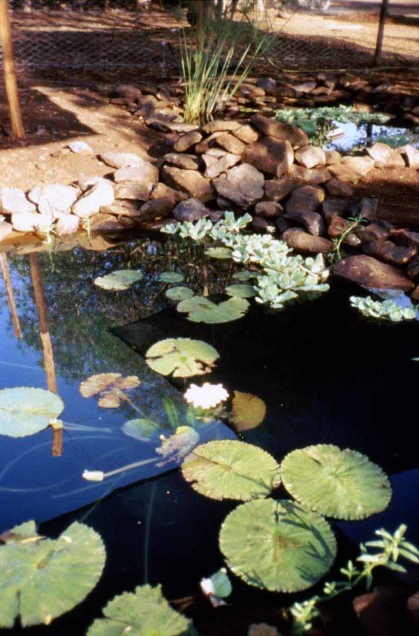 display ponds at National Museums of Kenya, Kisumu