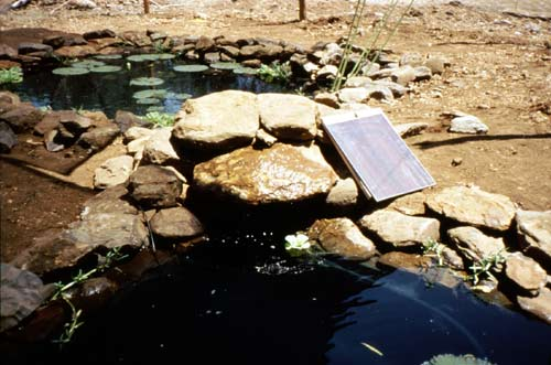 solar pond pump in display pond Kisumu, Kenya