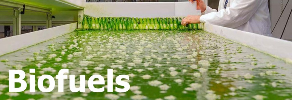 algae biofuel around the world Algal biofuel production is neither environmentally nor  and for the algae in these ponds to produce biofuel,  the world is waking up to biofuel.