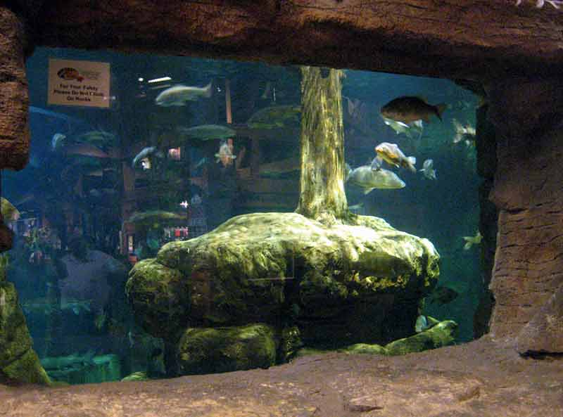 Bass pro shops fish curator hydrosphere water gardens for Bass fish tank