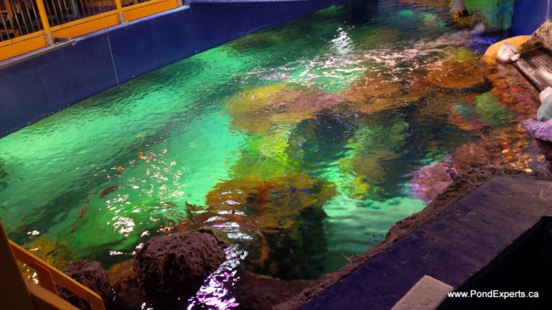 Above Rainbow Reef at Ripley's Aquarium of Canada