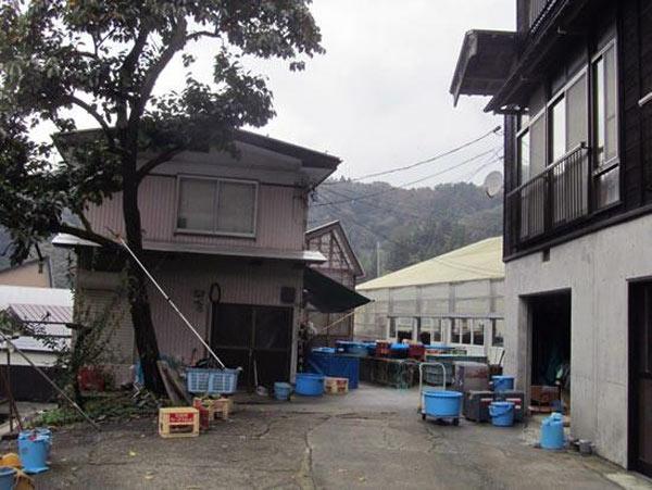 Kawakami koi farm