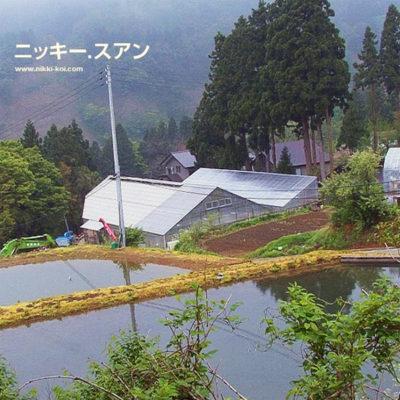 Shinoda koi farm