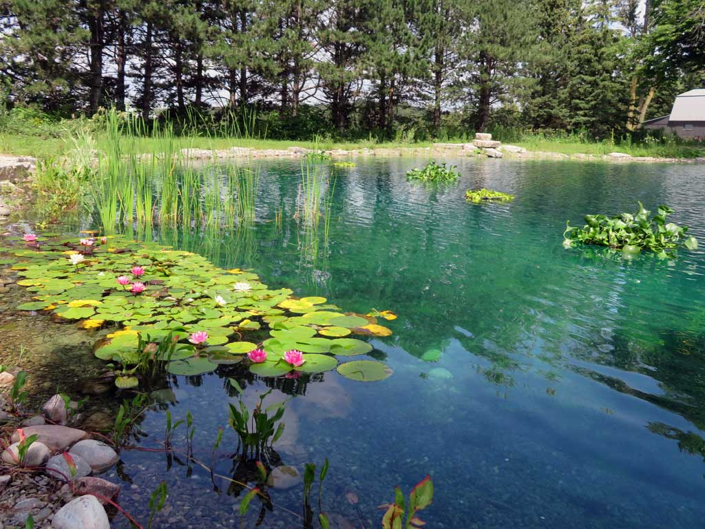 Large pond maintenance assessments and installations for Pond maintenance