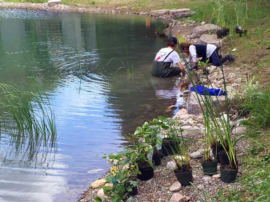 large pond aquatic planting