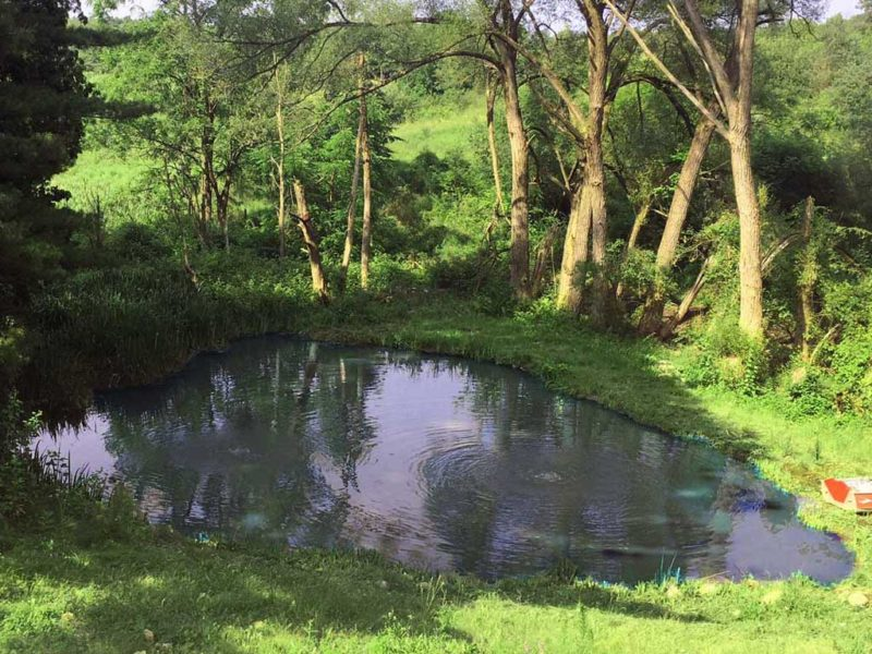 emergent pond weeds cleaned