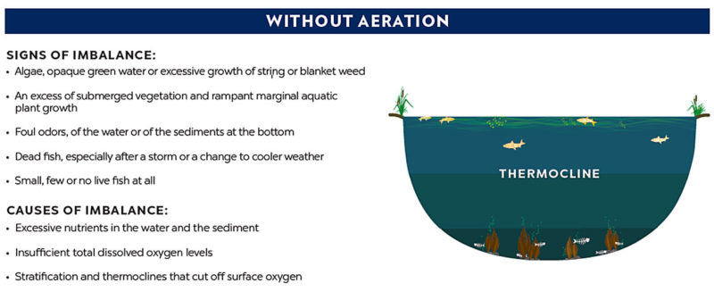 pond without aeration thermocline