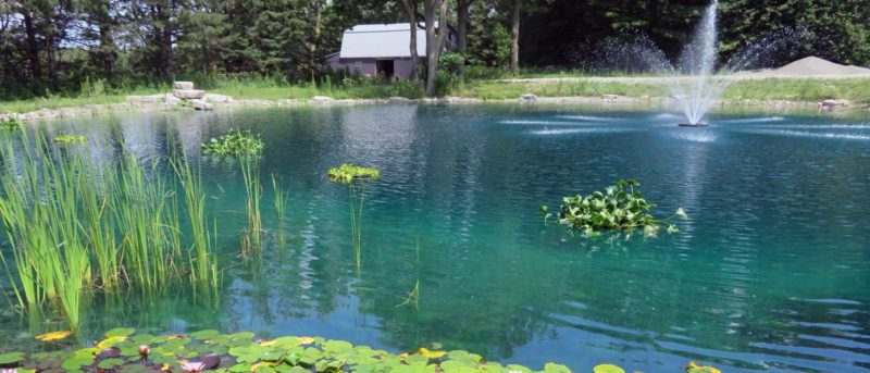 Large pond maintenance algae control