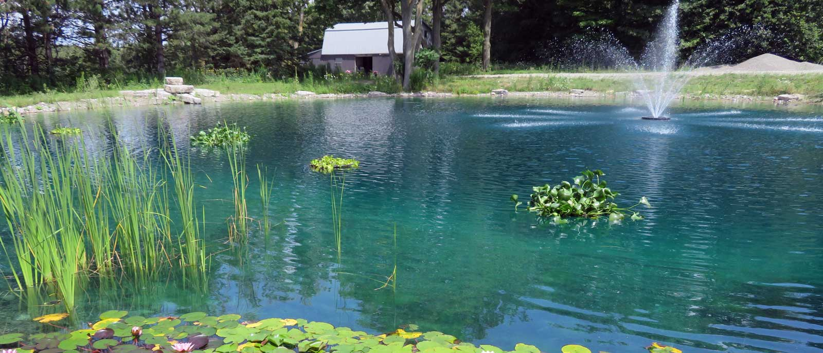 Large pond algae control hydrosphere water gardens for Large koi pond