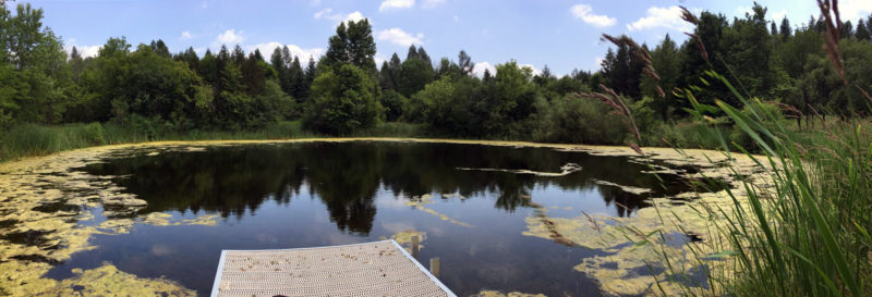 Large Pond Algae Removal