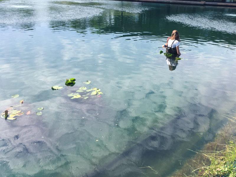 Aquatic Planting in Pond