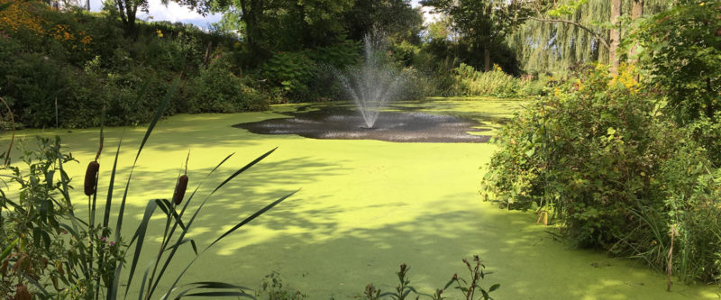 Large Pond Duckweed Removal
