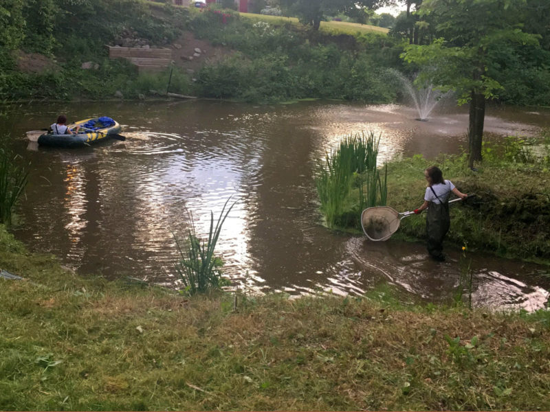 Duckweed Removal From Large Pond