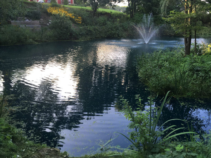 Large Pond Maintenance