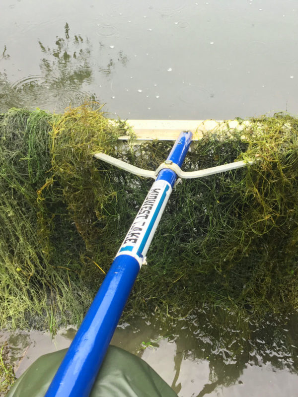 Pond Weed Identification
