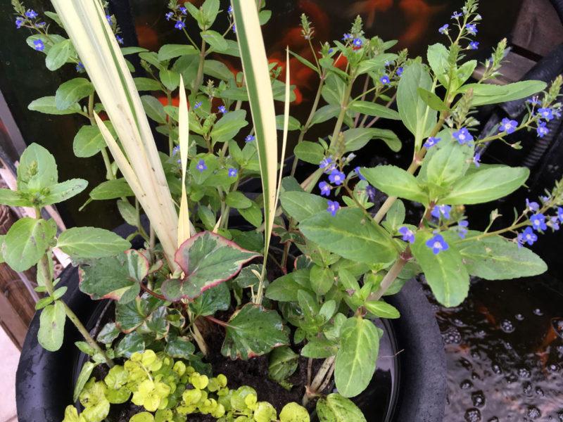 Custom Mixed Pond Plant Basket
