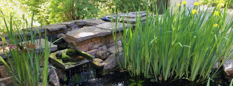Pond Plant Depth Zones Marginals