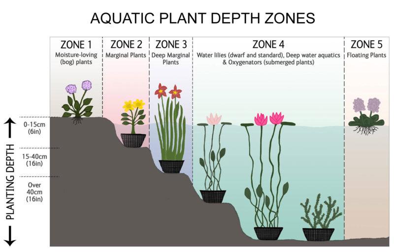 Pond Plant Depth Zones