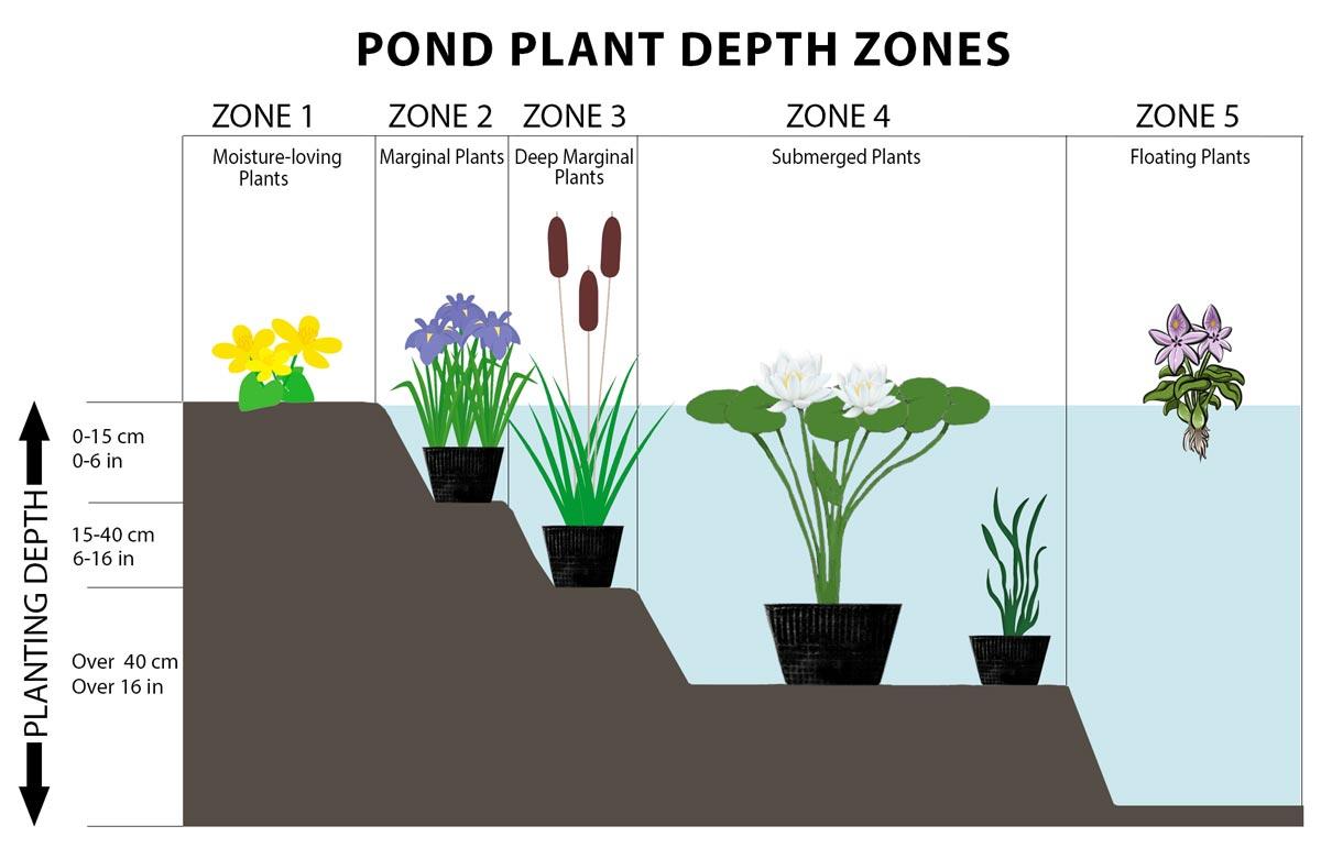 Pond Plant Depth Zones Hydrosphere Water Gardens